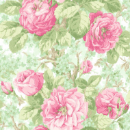 Обои Kt Exclusive English Rose
